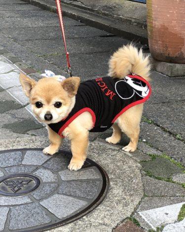 犬に出会うウオーキング!